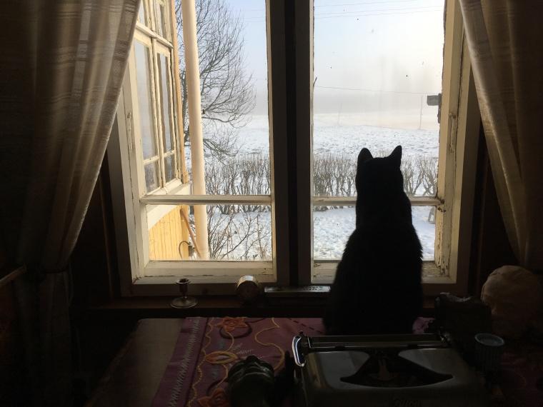 bagksu-kamarin-ikkuna
