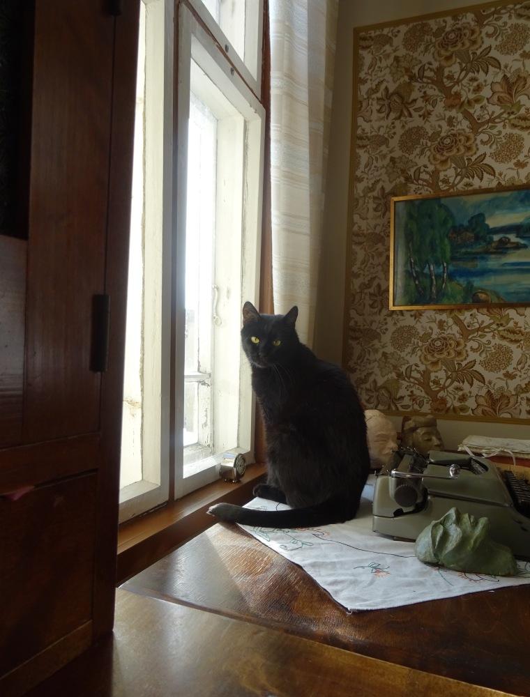 Bagsu kamarin ikkunan edessä