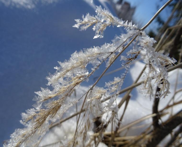 Kimaltava lumikaisla