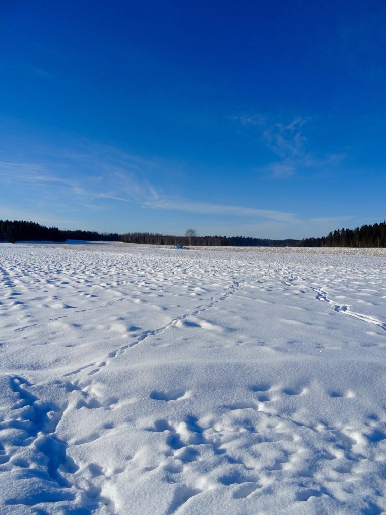 Luminen peltoaukea