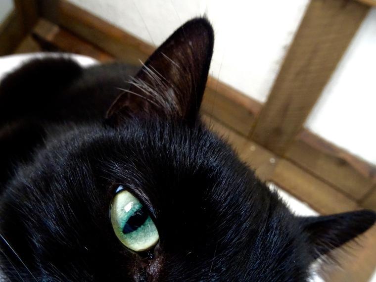 Nipsun silmä