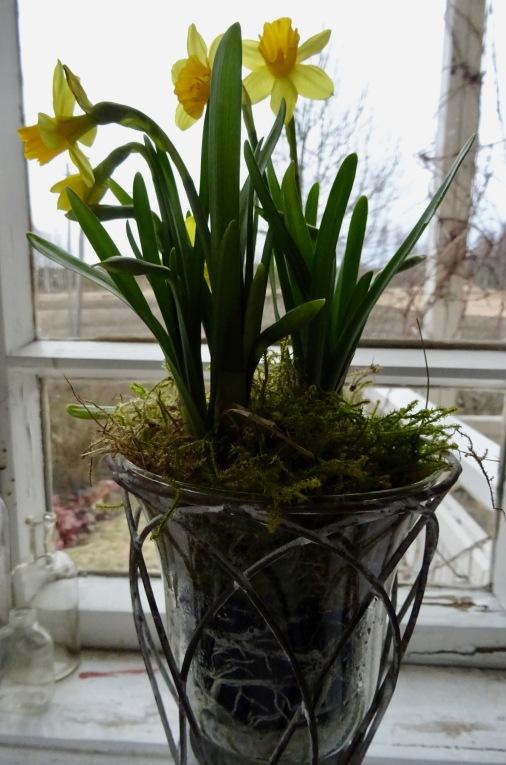 Narsissit verannalla
