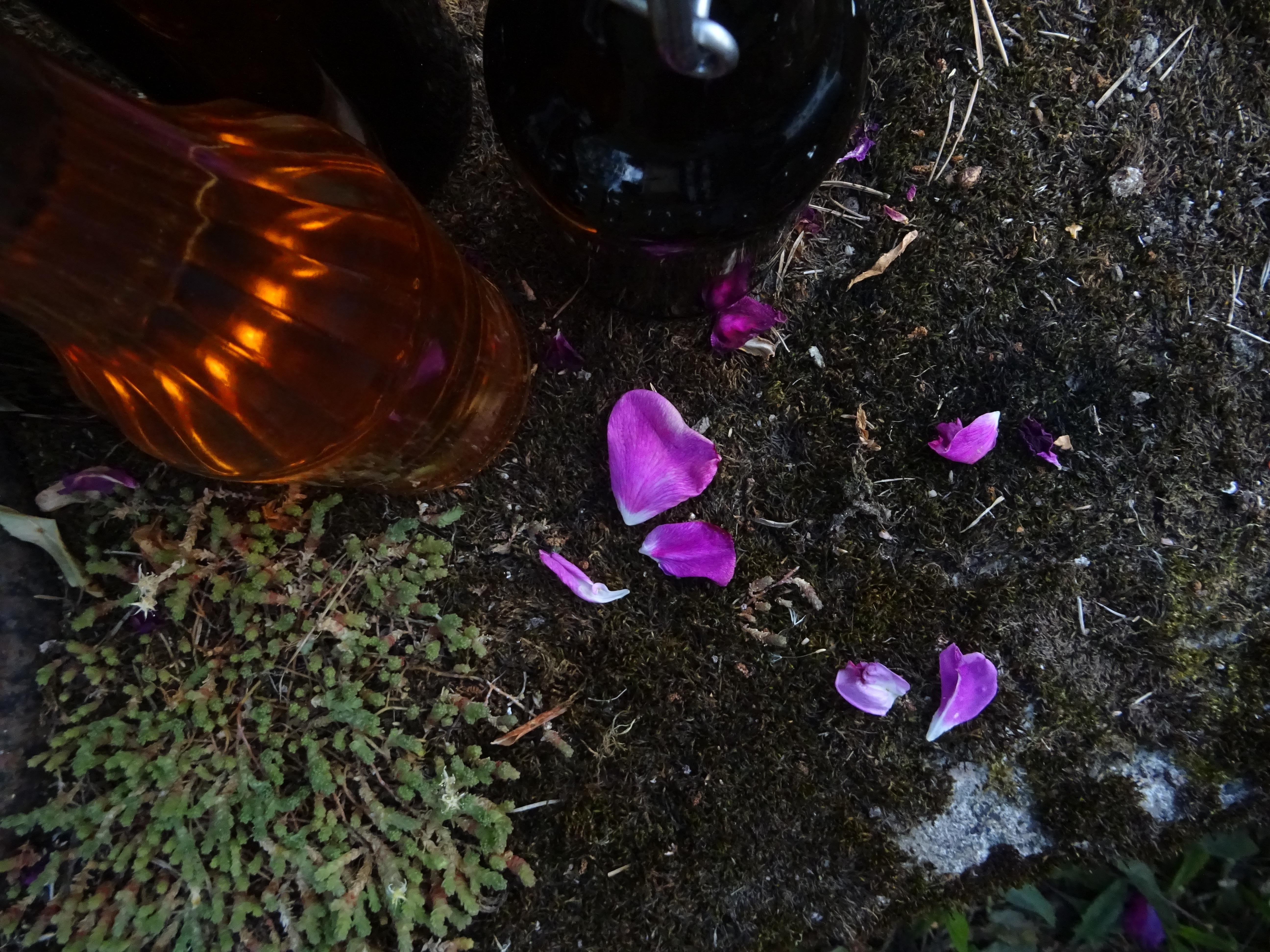 Pullot ja maksaruoho